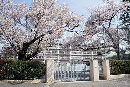 「平和の山桜」(平成28年4月6日撮影)